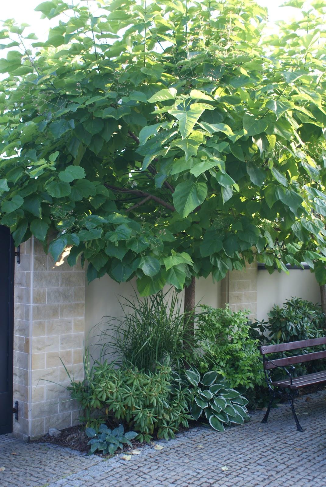 zaczarowany ogród 4
