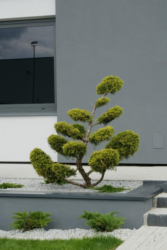 klasyka ogrody 5